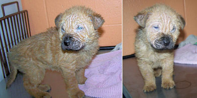 Puppy Journal Two Rescued Puppies With Mange And Serious